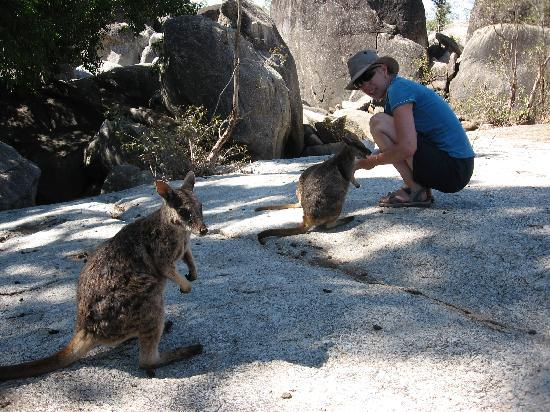 Granite Gorge Nature Park: Feeding the Rock Wallabies