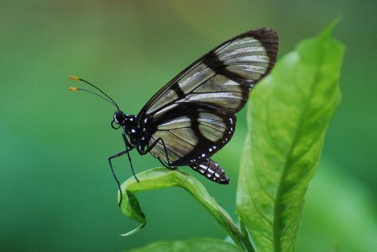 Yacuma Ecolodge: a beautiful butterfly