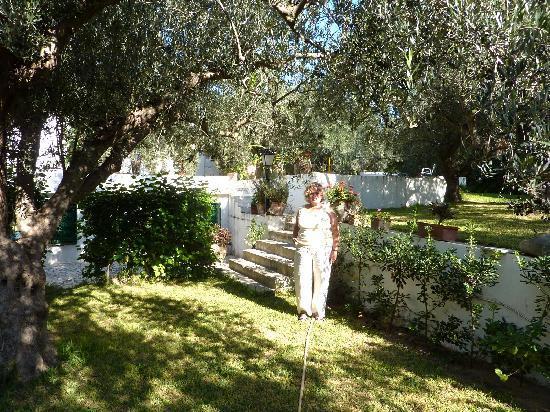 Pension Les Oliviers: Olive garder