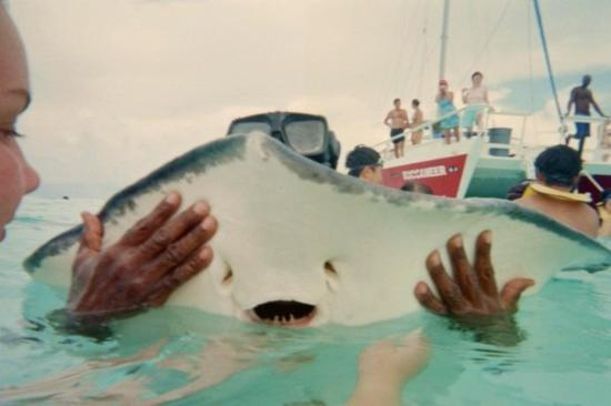 Stingray Watersports: A sting ray's mouth!