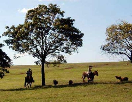 Jacarezinho: 10,000 acres for you to explore