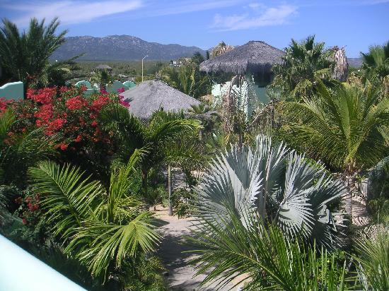 Casa Verde: gardens