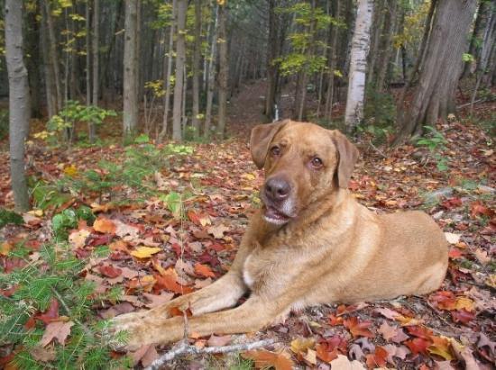 Val Morin, Canada : Hubert le chien!!!