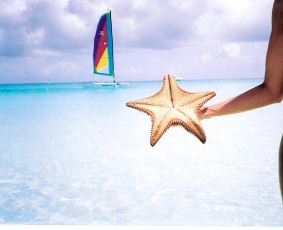 Providenciales: Me-starfish Grace Bay Beach