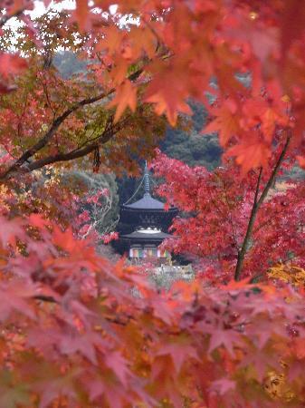 Eikan-dō : 紅葉がとても美しかったです