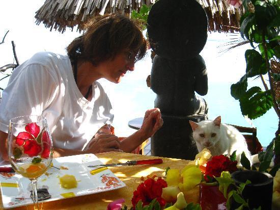 Fenua Mata'i'oa : Un de nos amis, à l'heure du petit déjeuner
