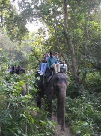 Jim Corbett National Park, India: They can walk in very narrow path