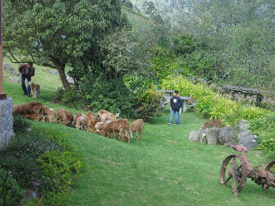 Hacienda Manteles: Ernesto and a young guest herding sheep through the gardens