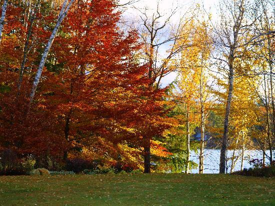 Fall foliage Wilson Lake Inn