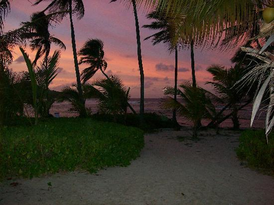 The Palms at Pelican Cove : Twilight Beach Setting