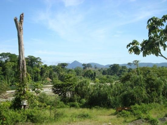 Matapalo une racine qui s 39 enroule autour d 39 un arbre et l for Bordure autour d un arbre