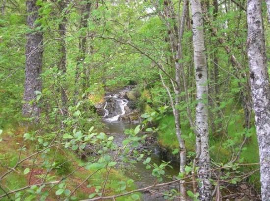 Plodda Falls Photo