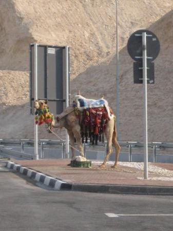 Afula, Israel: Jerusalem, Israel