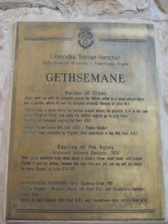 Garden of Gethsemane : Jerusalem, Israel