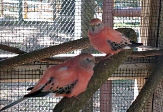 York's Wild Kingdom Zoo and Fun Park: Pretty birds at York