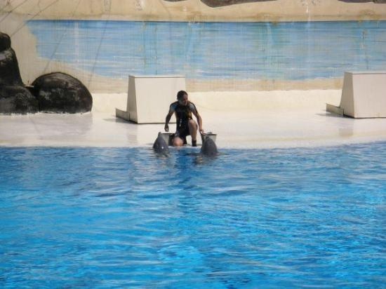 Castelnuovo del Garda, Italy: Største grunnen for at vi måtte innom Garda-land var Delfin showet de hadde der...