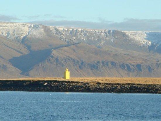 Videy Island Reykjavik Iceland Top Tips Before You Go