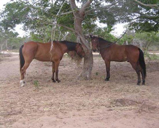 Mozambique Horse Safari