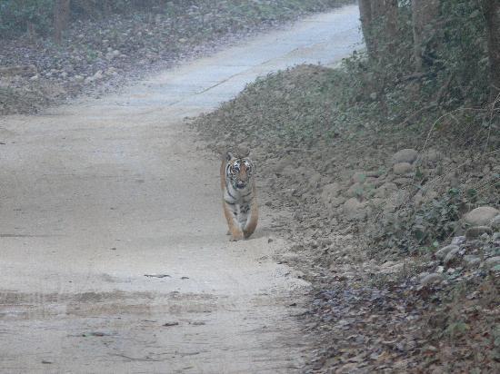 Dhela, Indien: Bijrani