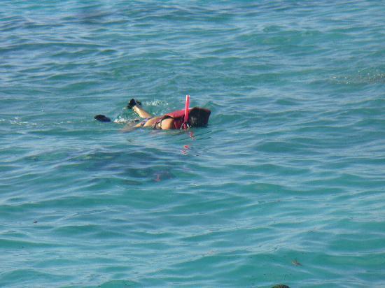Ocean Adventures Stingray Bay Caribbean Festival: secret world