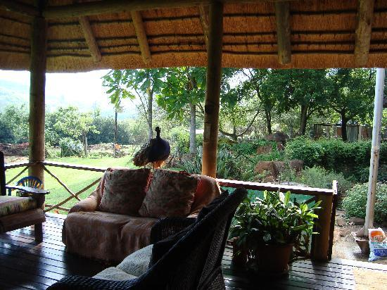 Rock-a-Bye Bed & Breakfast: Lounging area of breakfast veranda of main house