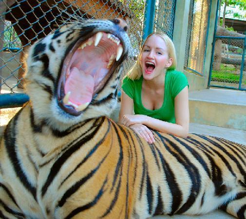 Big tiger. Grr!