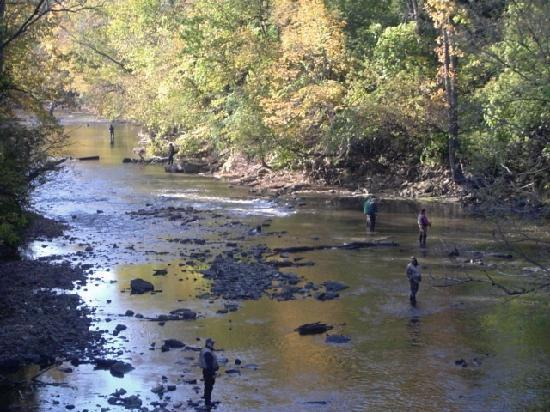 Riverside Inn Racine: Come Fly Fish for King Salmon and Lake Trout!