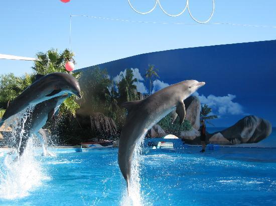 Colina da Lapa: Dolphins at Zoo Marine