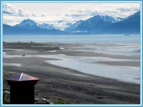 Driftwood Inn & Homer Seaside Lodges: View from Lodges
