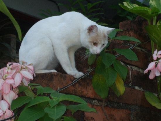 La Terraza Inn: Resident Pussy Cat