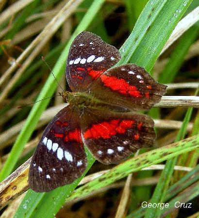 San Jorge de Milpe Eco-Lodge Orchid & Bird Reserve: Butterflies are common at Milipe