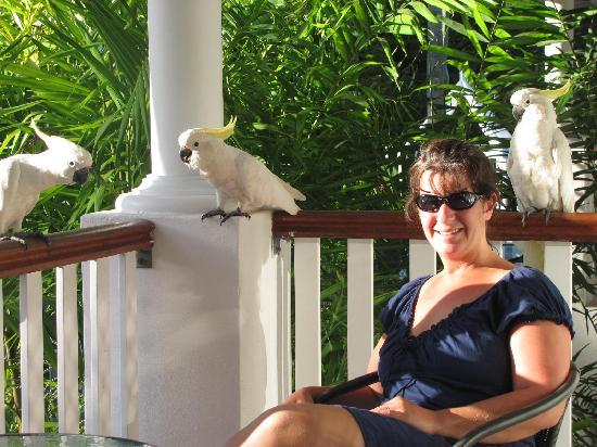 BEST WESTERN Mango House Resort: feeding cockatoos on deck