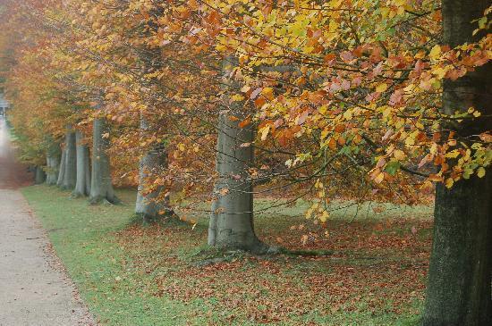 แช็ทสเวิร์ธ: tree-lined walkways