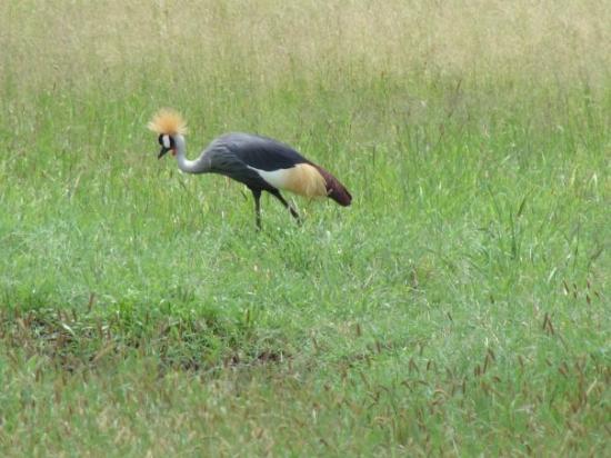 Serengeti Nationalpark Foto