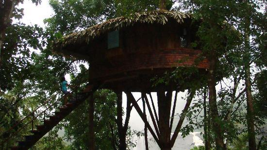 Rainforest Resort Athirapally Falls: the brand new tree-house