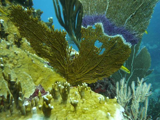 Neptune Dive Center : Nice colors underwater