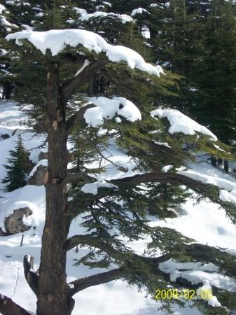 Foto de The Cedars of God