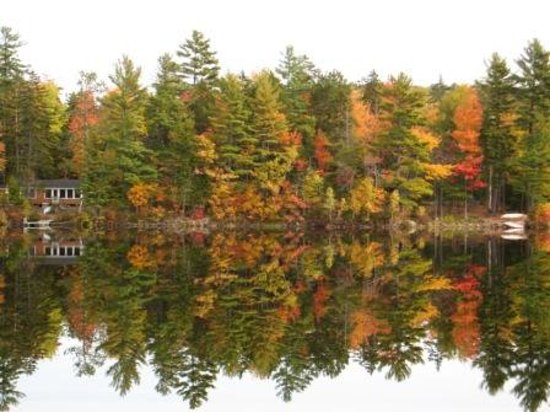 Pitcher Pond : Fall Colors