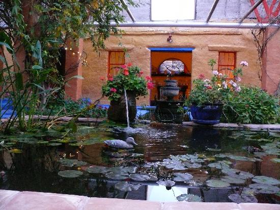 Eve's Garden Bed & Breakfast: the main koi pond