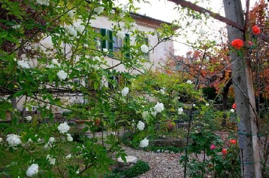 Bed and Breakfast La Limonaia: Flowers in bloom in the garden in November
