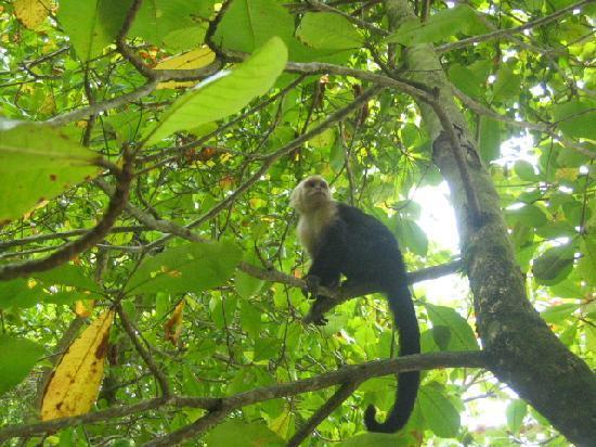 Hotel El Tajalin: Monkey