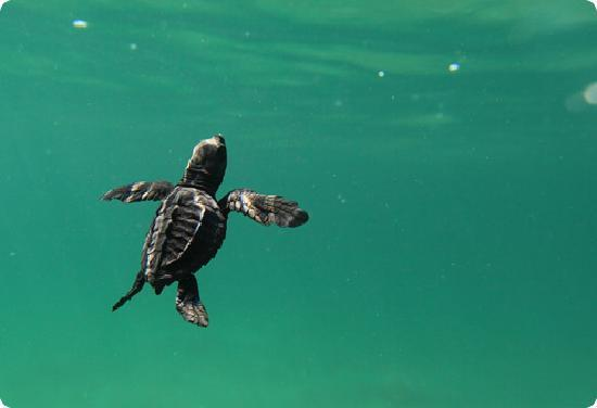Playa Viva: On Site Turtle Sanctuary - come release baby turtles back to the ocean