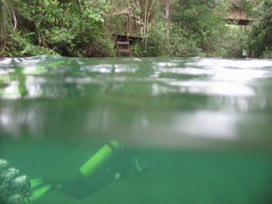 Bonito, MS: Diving in the River - Pantanal-BRASIL