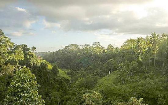 Villa Awang Awang: view