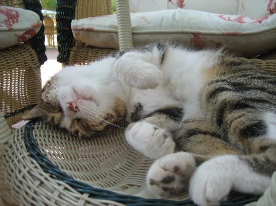 Riviera Hotel & SPA: Rivieras cat relaxing