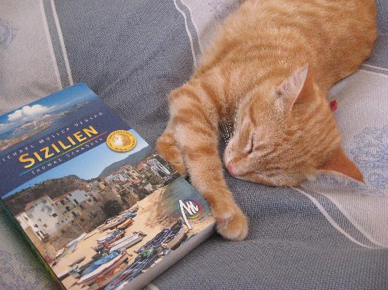 La Praia di Rinella: Our cat Leo is a real Siciliano!