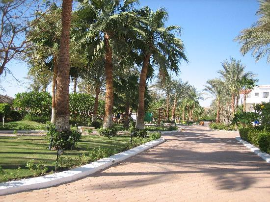 Iberotel Palace: hotel grounds