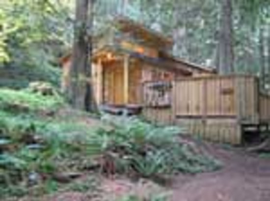 Deep forest cabins at mt rainier resort reviews deals for Mount rainier lodging cabins