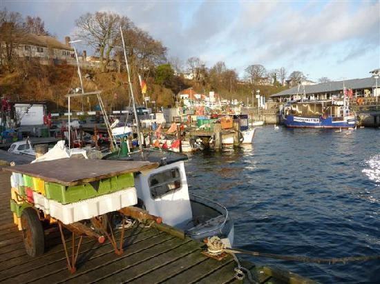 Seaside Appartements Ruegen: Historischer Fischerhafen als Gorumet- und Anglerparadies