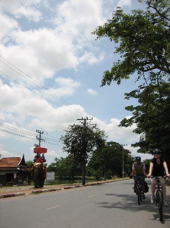 Ayutthaya Boat & Travel: Cycling around Ayutthaya